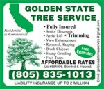 Golden-State-Tree-EP14.jpg