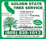 Golden-State-Tree-EP14.jpg