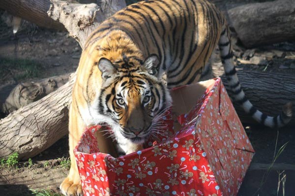 zoo holiday magic atascadero