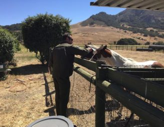 Woman arrested for felony animal neglect, 11 horses seized