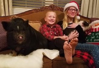 Concerns over pig rescue organization voiced to city council