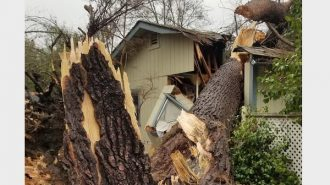 tree through atascadero apartment complex