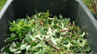 green waste atascadero