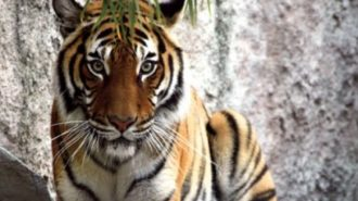 Summer camps offered at Charles Paddock Zoo