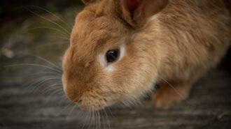 rabbit show mid state fair